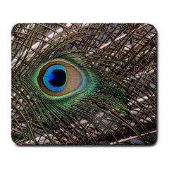 Peacock Tail Feathers Large Mousepads