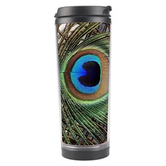 Peacock Tail Feathers Travel Tumbler