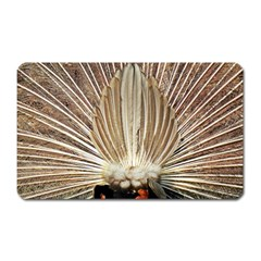 Peacock Wheel Bird Nature Magnet (rectangular)