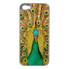 Peacock Feather Bird Peafowl Apple Iphone 5 Case (silver)