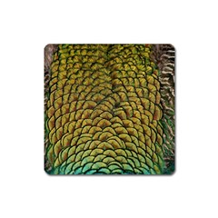 Peacock Bird Feather Color Square Magnet
