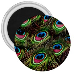 Peacock Feathers Feather Color 3  Magnets