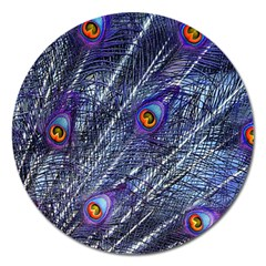Peacock Feathers Color Plumage Magnet 5  (round)