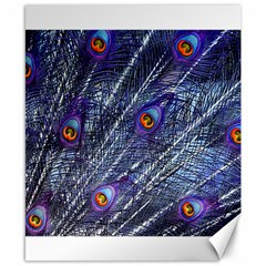 Peacock Feathers Color Plumage Canvas 8  X 10