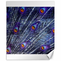 Peacock Feathers Color Plumage Canvas 16  X 20
