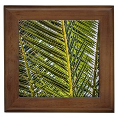 Palm Fronds Palm Palm Leaf Plant Framed Tiles