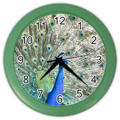 Peacock Bird Colorful Plumage Color Wall Clock