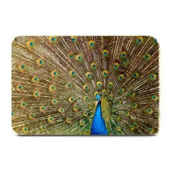 Peacock Plumage Bird Peafowl Plate Mats