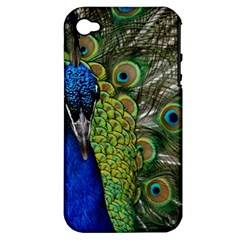 Peacock Close Up Plumage Bird Head Apple Iphone 4/4s Hardshell Case (pc+silicone)