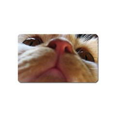 Funny Cute Cat Macro Eyes Magnet (name Card) by LoolyElzayat