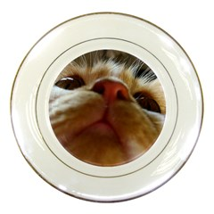 Funny Cute Cat Macro Eyes Porcelain Plates by LoolyElzayat