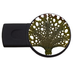 Leaf Tree Usb Flash Drive Round (4 Gb)