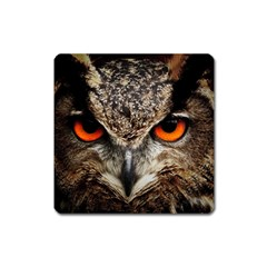 Owl s Scowl Square Magnet by WensdaiAddamns