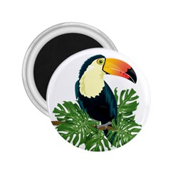 Tropical Birds 2 25  Magnets