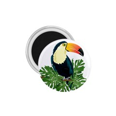 Tropical Birds 1 75  Magnets