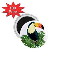 Tropical Birds 1 75  Magnets (100 Pack)