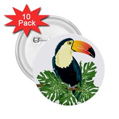 Tropical Birds 2 25  Buttons (10 Pack)