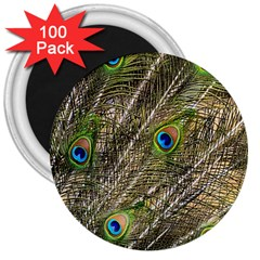 Green Peacock Feathers Color Plumage 3  Magnets (100 Pack)