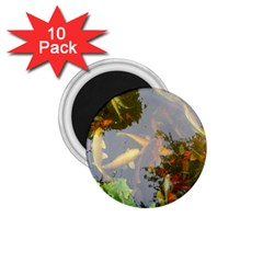 Koi Fish Pond 1 75  Magnets (10 Pack)