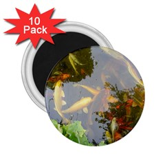 Koi Fish Pond 2 25  Magnets (10 Pack)
