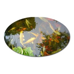 Koi Fish Pond Oval Magnet