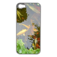 Koi Fish Pond Apple Iphone 5 Case (silver)