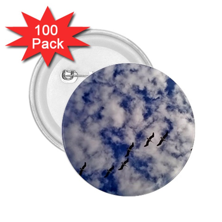 Pelicans In Flight 2.25  Buttons (100 pack)