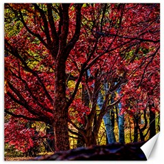 Autumn Colorful Nature Trees Canvas 20  X 20