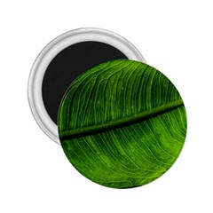 Green Leaf Plant Freshness Color 2 25  Magnets