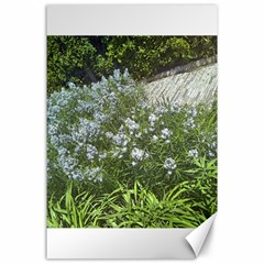 Lurie Garden Amsonia Canvas 24  X 36  by Riverwoman