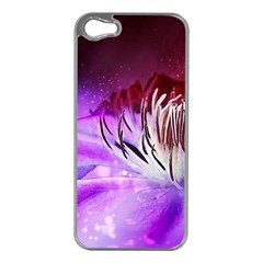 Clematis Structure Close Up Blossom Iphone 5 Case (silver)