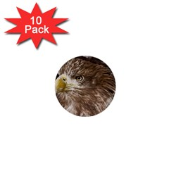 Sea Eagle Raptor Nature Predator 1  Mini Buttons (10 Pack)