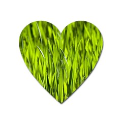 Agricultural Field   Heart Magnet by rsooll