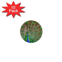 Peacock Color Bird Colorful 1  Mini Buttons (10 Pack)