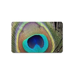 Peacock Feather Close Up Macro Magnet (name Card)