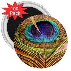 Peacock Feather Bird Colorful 3  Magnets (100 Pack)