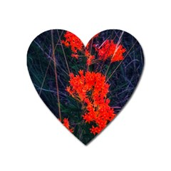Neon Orange Butterfly Weed Heart Magnet by okhismakingart