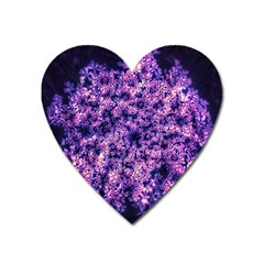 Queen Annes Lace In Purple And White Heart Magnet by okhismakingart