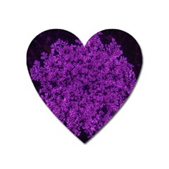 Queen Annes Lace In Purple Heart Magnet by okhismakingart