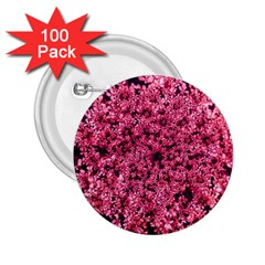 Queen Annes Lace In Red Part Ii 2 25  Buttons (100 Pack)
