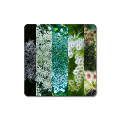 Queen Annes Lace Vertical Slice Collage Square Magnet by okhismakingart