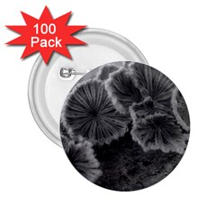 Tree Fungus Black And White 2 25  Buttons (100 Pack)  by okhismakingart