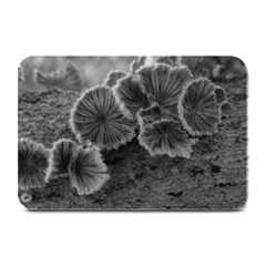 Tree Fungus Black And White Plate Mats by okhismakingart