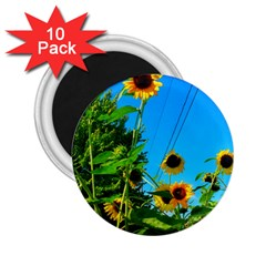 Bright Sunflowers 2 25  Magnets (10 Pack)