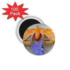 Moth And Chicory 1 75  Magnets (100 Pack)  by okhismakingart
