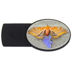 Moth And Chicory Usb Flash Drive Oval (2 Gb) by okhismakingart