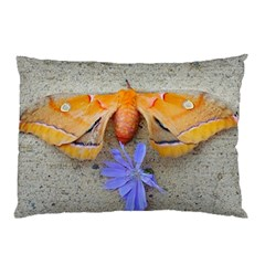 Moth And Chicory Pillow Case by okhismakingart