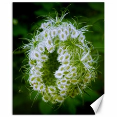 Green Closing Queen Annes Lace Canvas 16  X 20  by okhismakingart