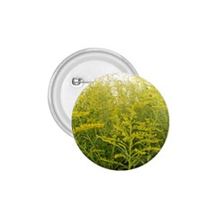 Yellow Goldenrod 1 75  Buttons