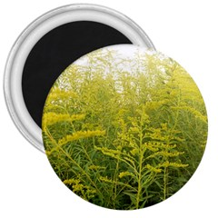 Yellow Goldenrod 3  Magnets